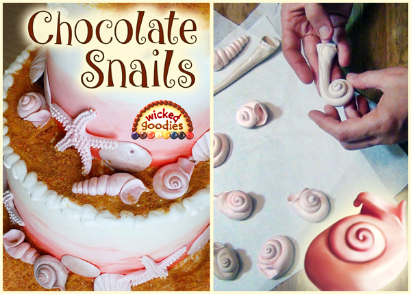 Modeling Chocolate Snail Shells